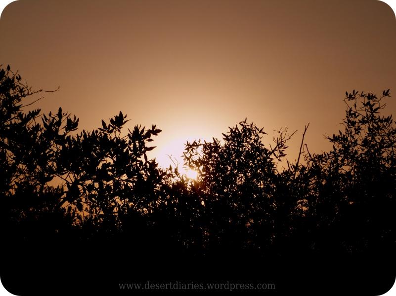 Serene Sky Shot